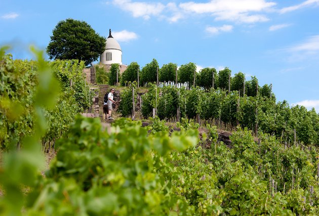 Elbland_Vineyard Wackerbarth ©Oliver Killig.jpg