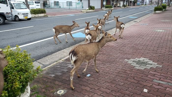 animals-in-streets-during-coronavirus-quarantine-5e70e6652d431__700.jpg