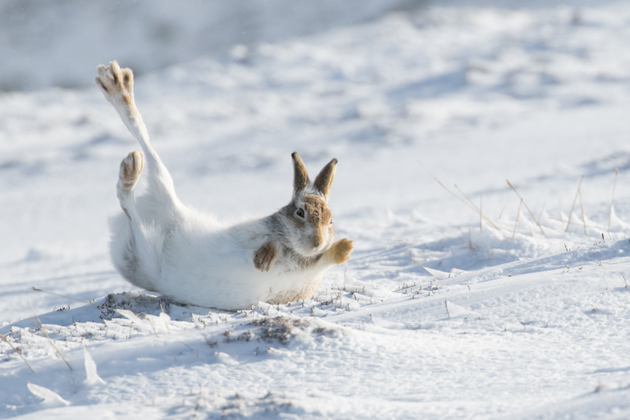145.-Kate-MacRae-Mountain-hare-2-MPOY2020-small-768x512.png