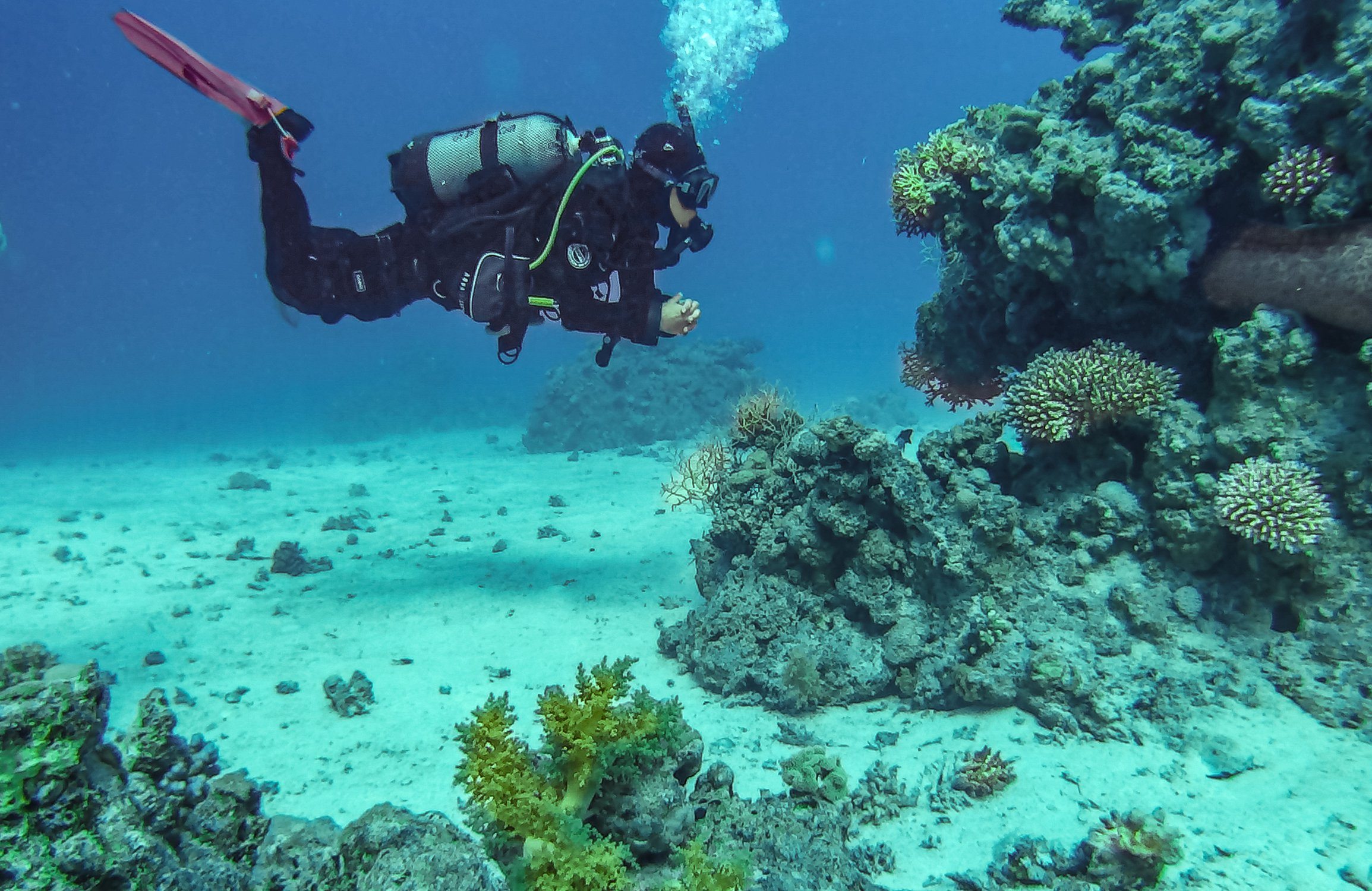In the Red Sea