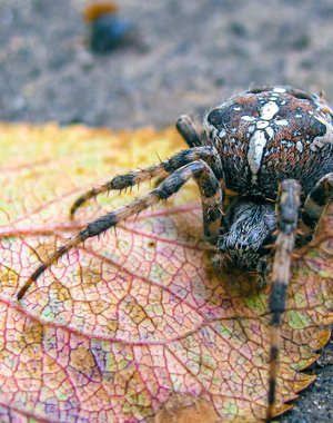 Spider on the leaf