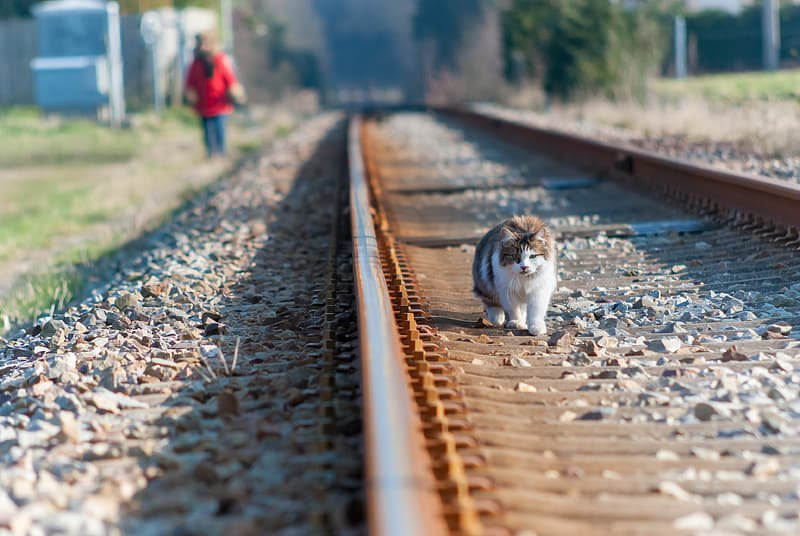 white-and-brown-cat-on-train-rail-during-daytime.jpg