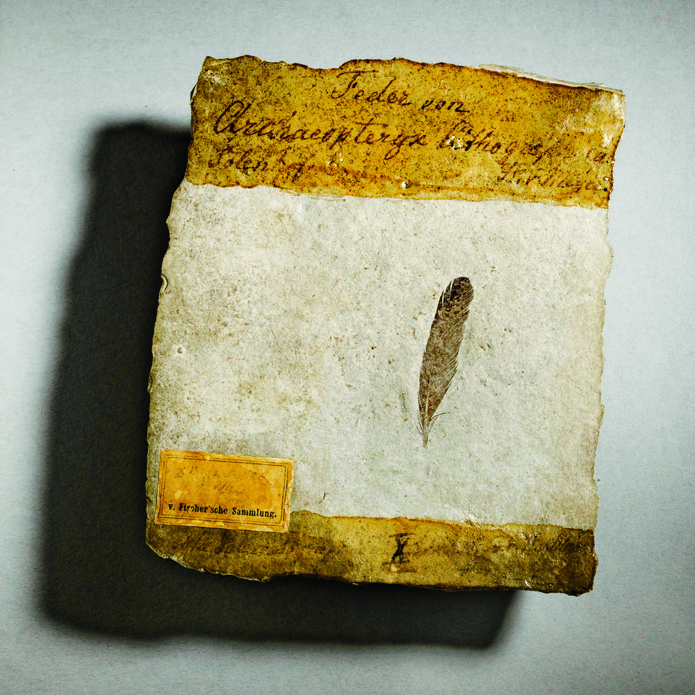 STOCK_BT_09_2021_Archaeopteryx_first feather.jpg
