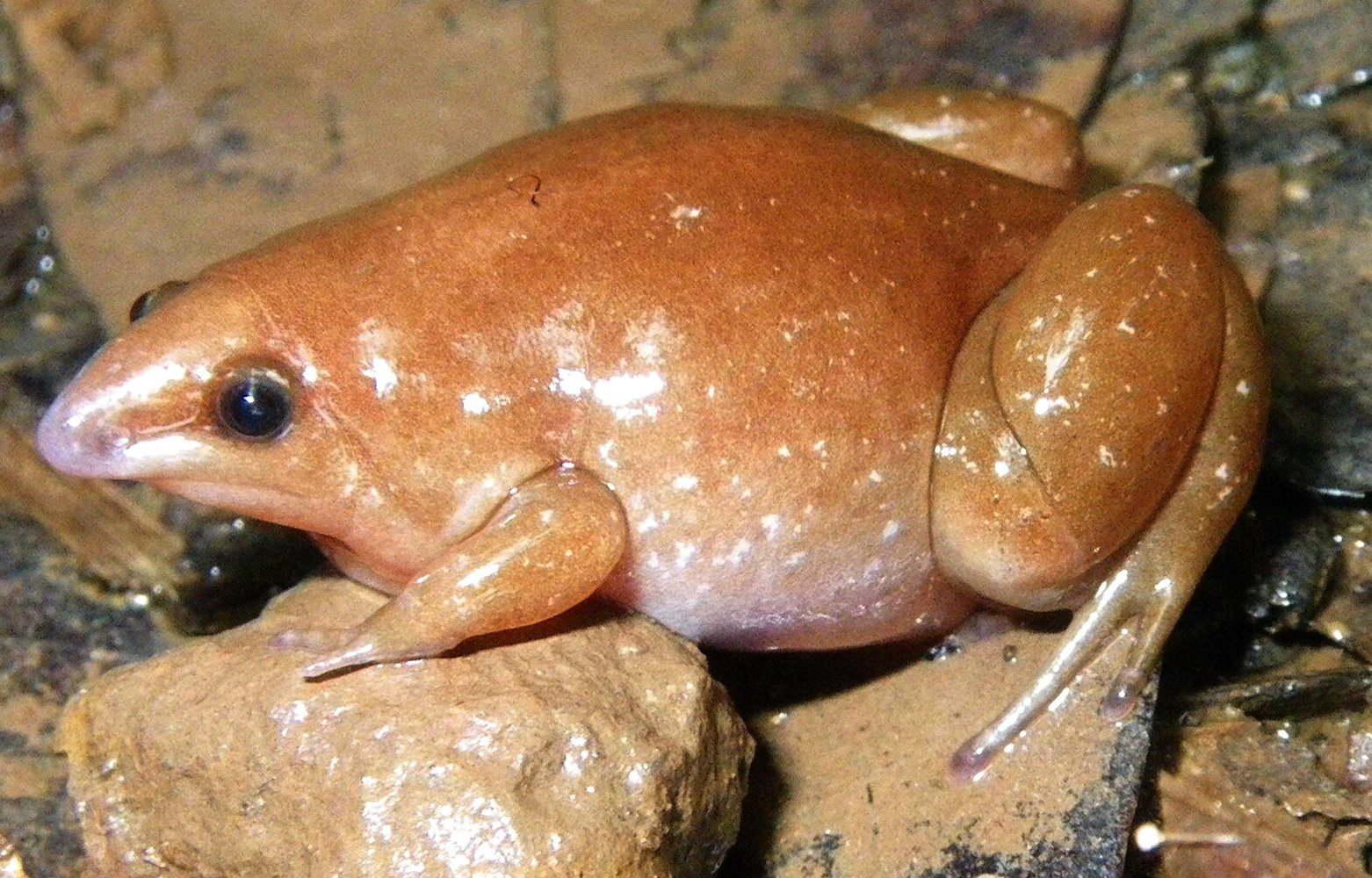 zombie-frog-discovered.jpg